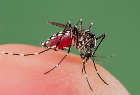 Dengue Fever: Causes, Symptoms and Effective Treatment